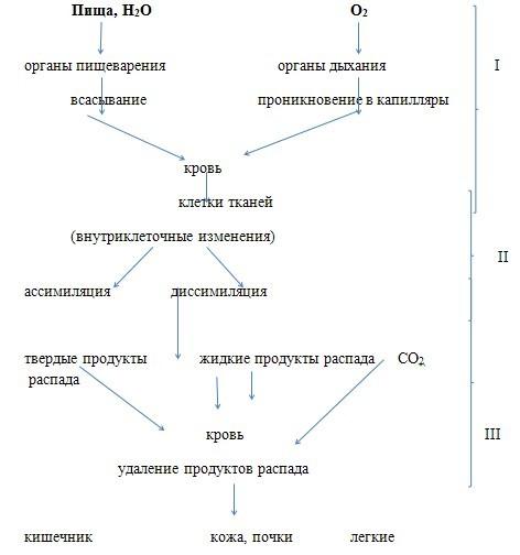 урок биологии